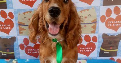Espaço de atenção animal realiza feira de adoção de cachorros no sábado
